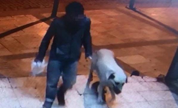 Her Satırı Midenizi Bulandıracak! Denizli'de Bir Sapık, Boğarak Öldürdüğü Sokak Köpeğine Tecavüz Etti