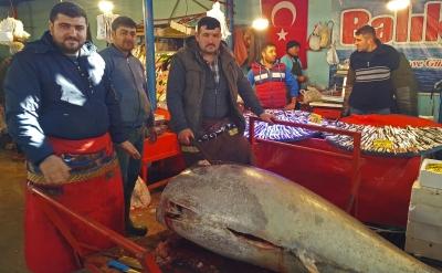 Ağırlığı 523 Kilo! Yakaladığı Balığı Gören Telefona Sarılıyor