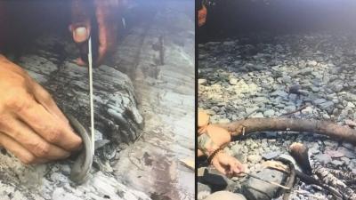 Samsun'da Dehşet! Nesli Tükenmekte Olan Yılanı Öldürdü! Sonrada Pişirip Yedi