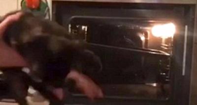 Vahşet Son Bulmuyor! Arkadaşlarını Eğlendirmek İçin Savunmasız Kediyi 375 Derece Isıdaki Fırına Atıp Öldürdü!