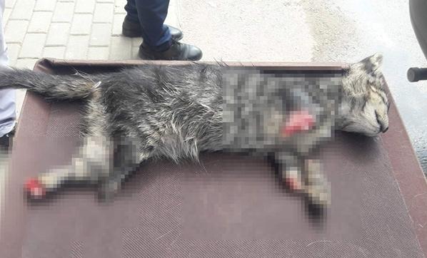 Adanada dört ayağı kesilmiş kedi bulundu 91