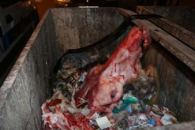 Adıyaman'da Korkunç Görüntü! Çöp Konteynırından Çıkan Kokular Vahşeti Ortaya Çıkardı