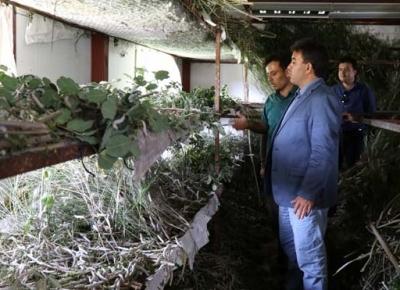 Antalya'da İpek Böceğinden 40 Günde 15 Bin Lira Kazanıyorlar