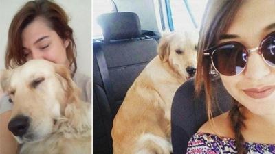 Ayrılan Sevgililer Köpeklerini Paylaşamıyor! Köpeğini Almak İçin Velayet Davası Açtı