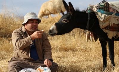 Belediye Başkanı Seçildi Ama Çobanlıktan Vazgeçemedi
